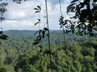 La forêt vue depuis la trijonction. crédit: FM Le Tourneau